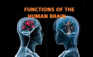 11 Executive Functions Of The Human Brain